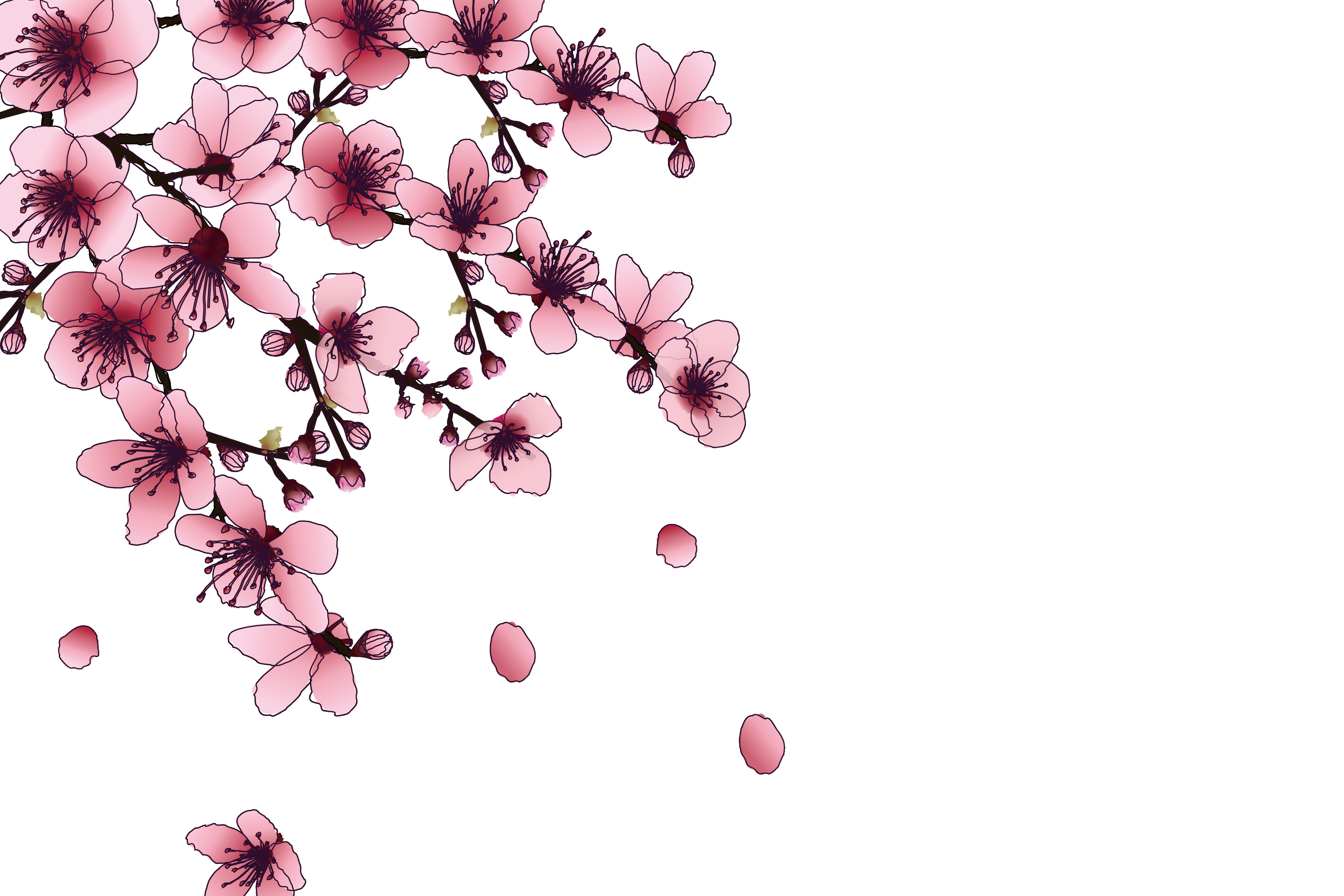 Hình ảnh hoa đào tách nền miễn phí 5