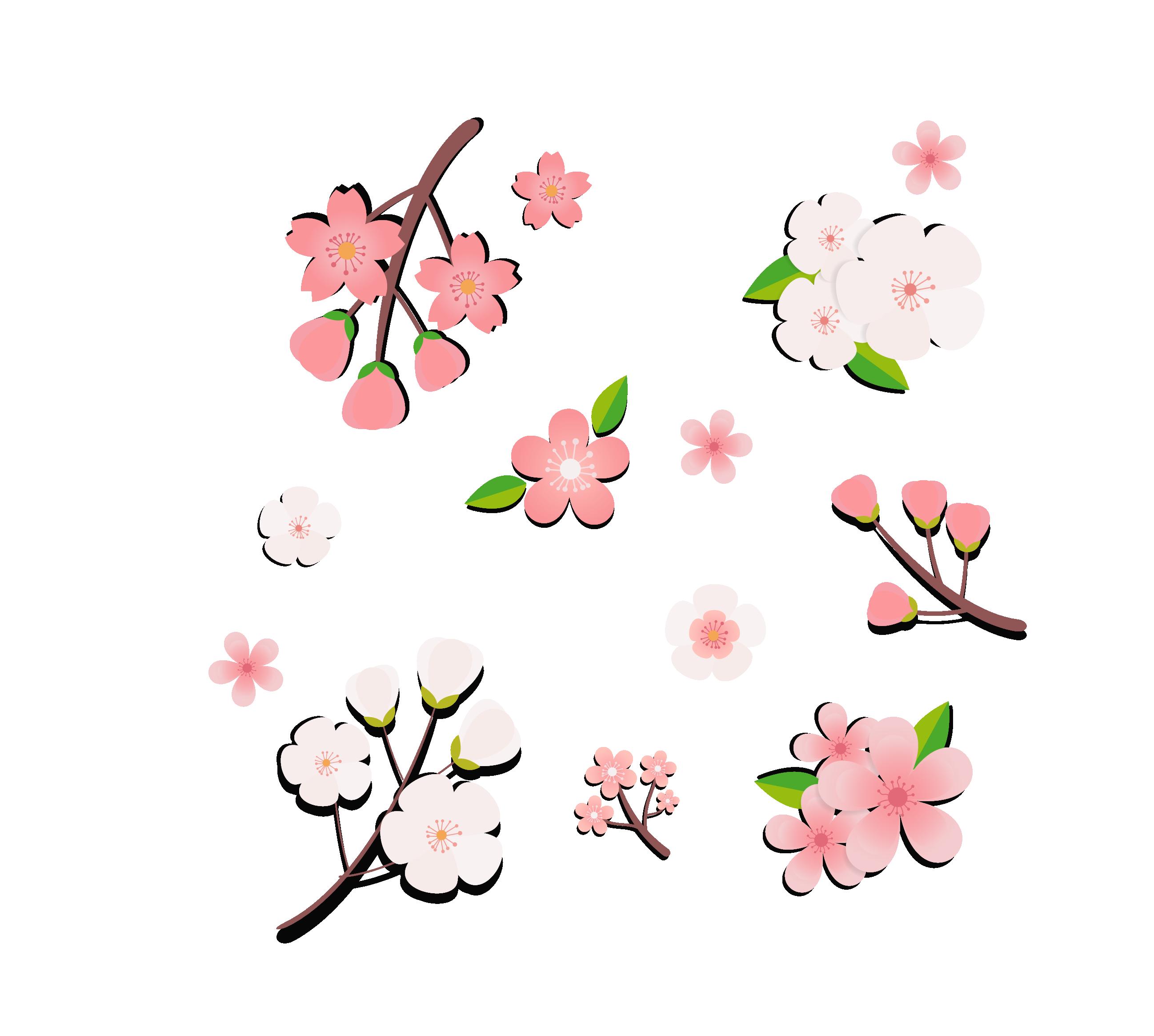 Ảnh hoa đào png đẹp dùng cho thiết kế miễn phí 4