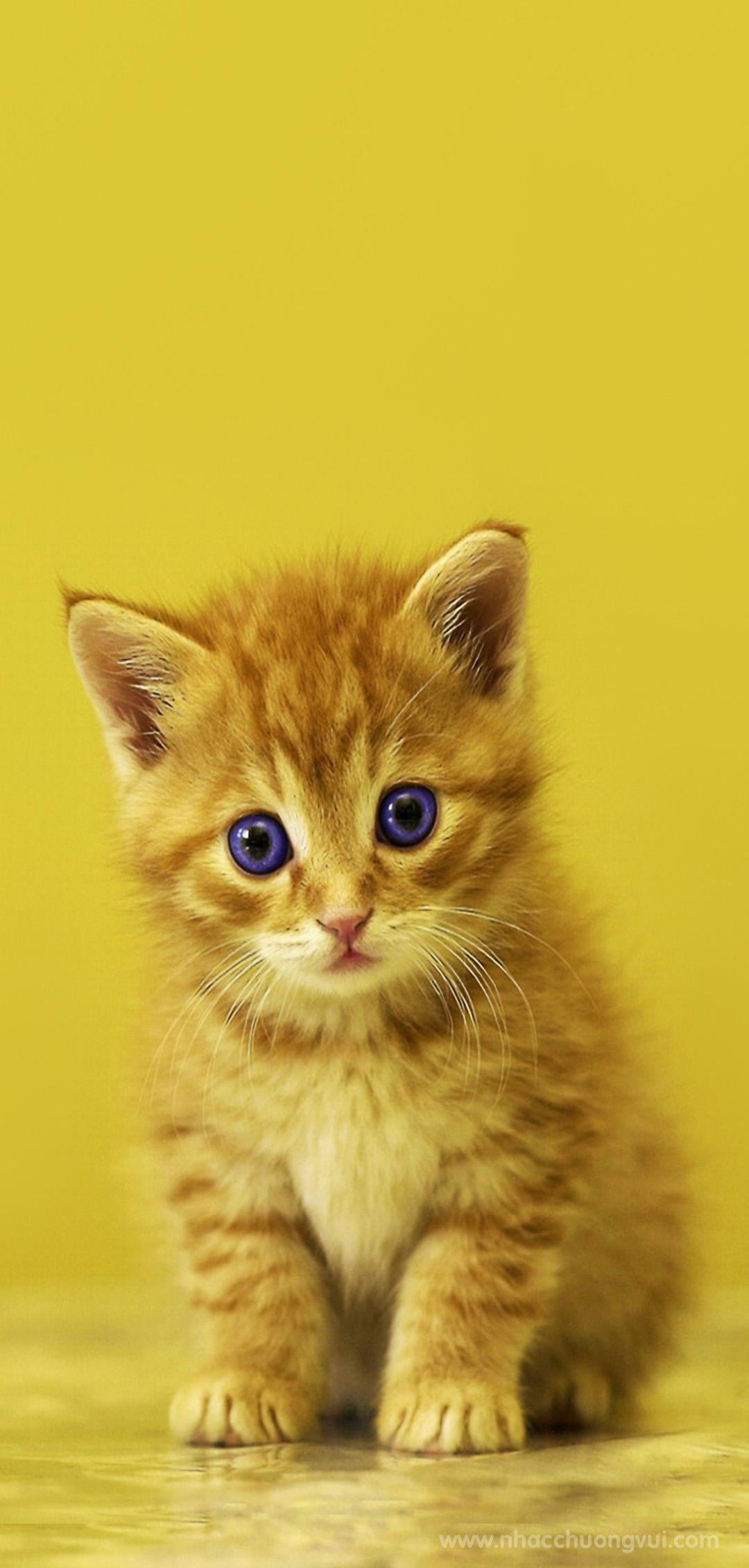 Hình nền mèo cho điện thoại dễ thương nhất 1
