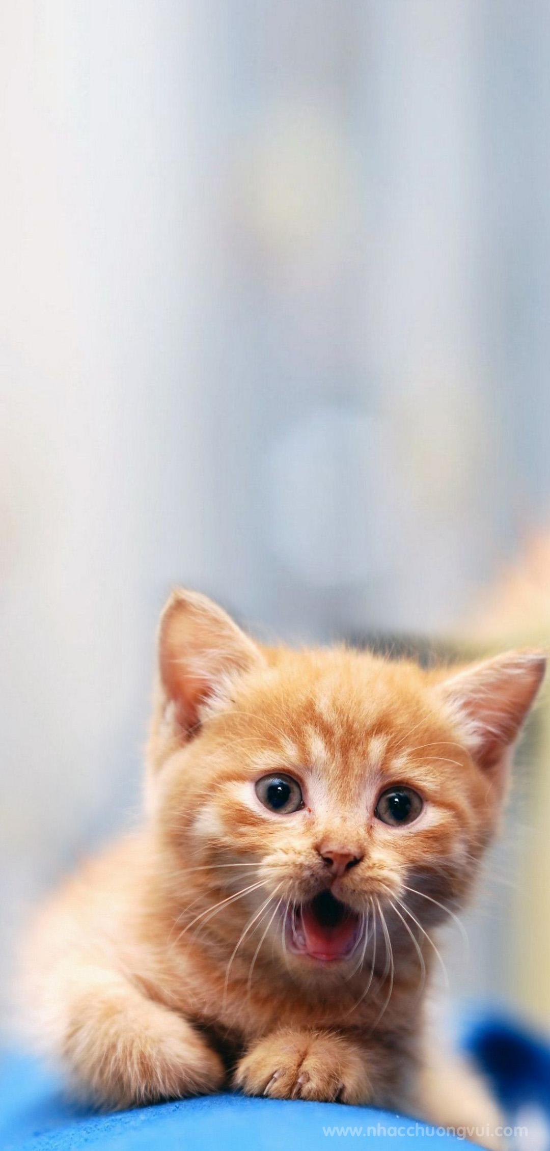 Hình ảnh nền mèo cho điện thoại dễ thương nhất 10