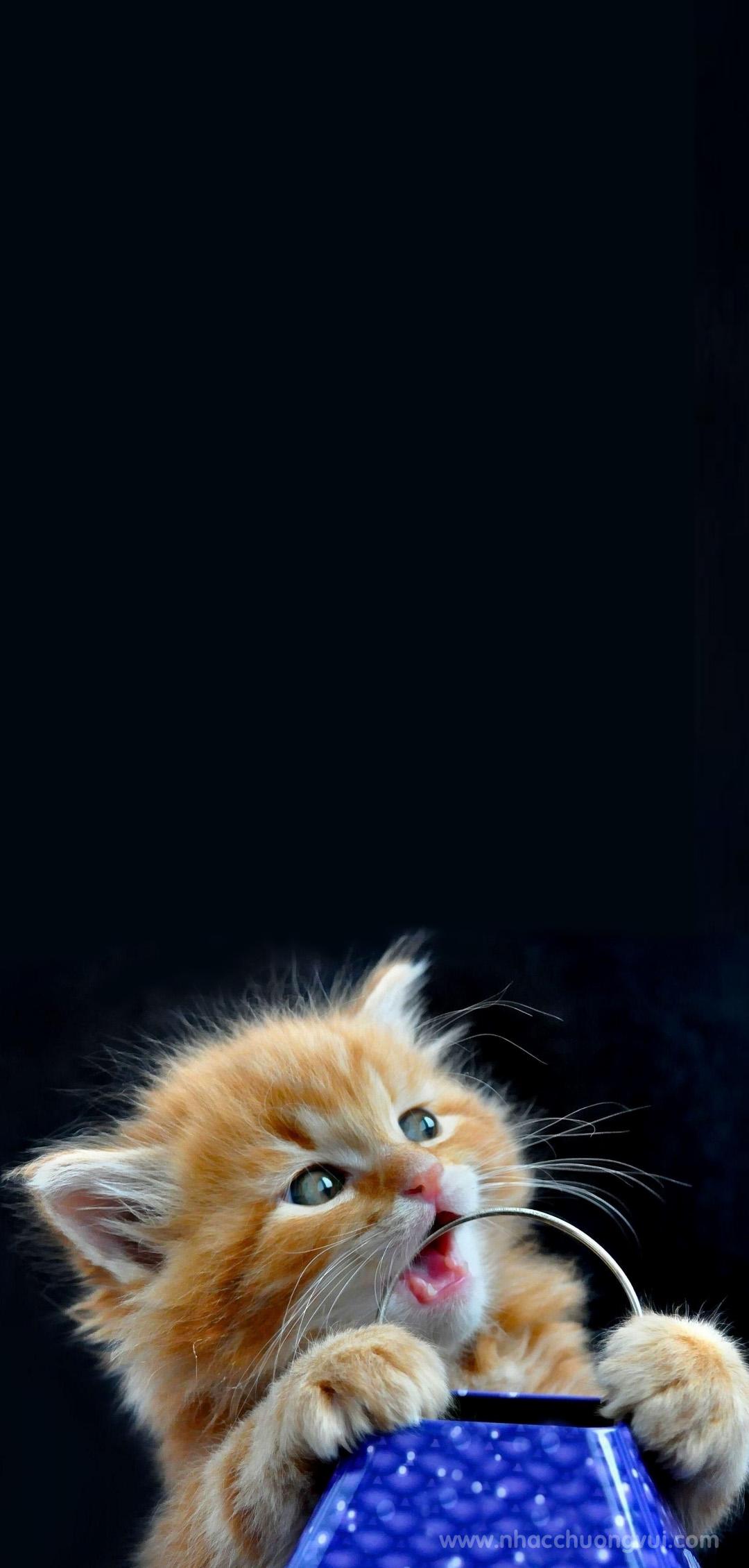 Ảnh nền mèo cho điện thoại dễ thương nhất 11
