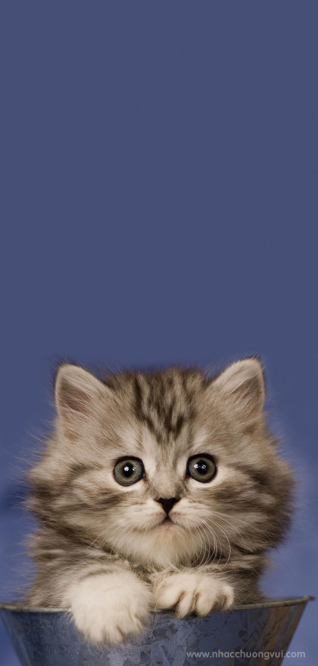 Hình nền mèo cho điện thoại dễ thương nhất 12