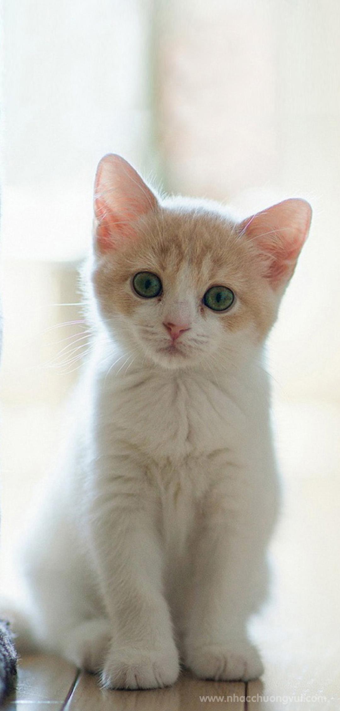 Hình nền mèo dễ thương cho điện thoại 14