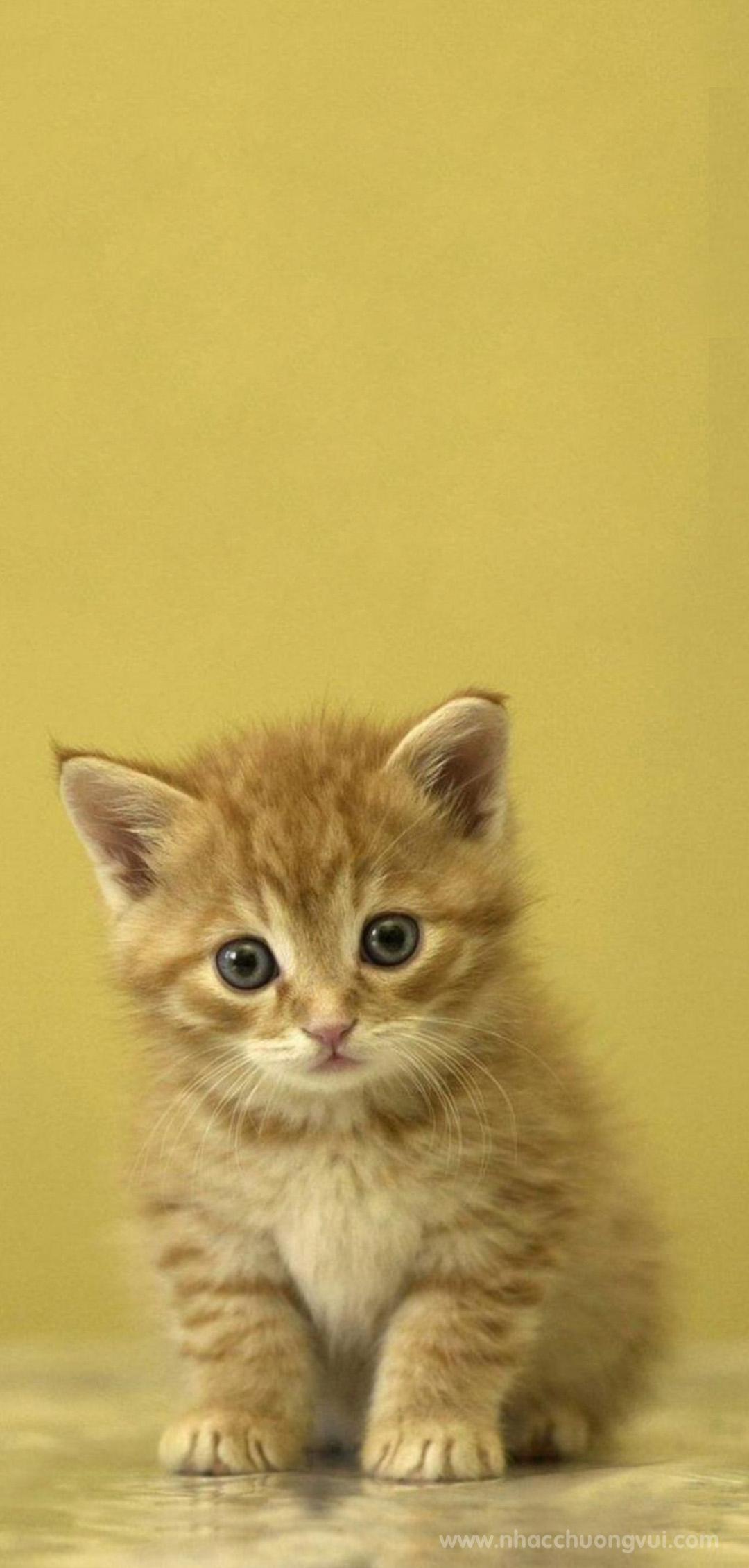 Hình nền mèo cho điện thoại dễ thương nhất 15