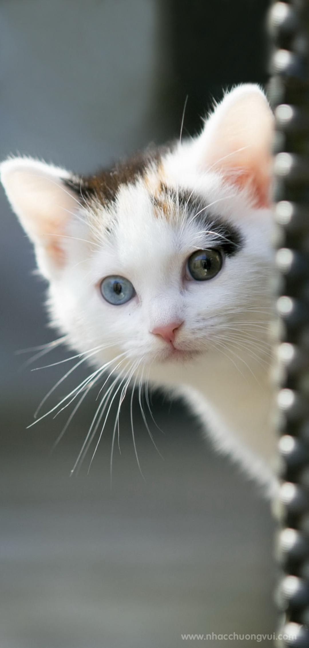 Hình nền mèo cho điện thoại dễ thương nhất 16