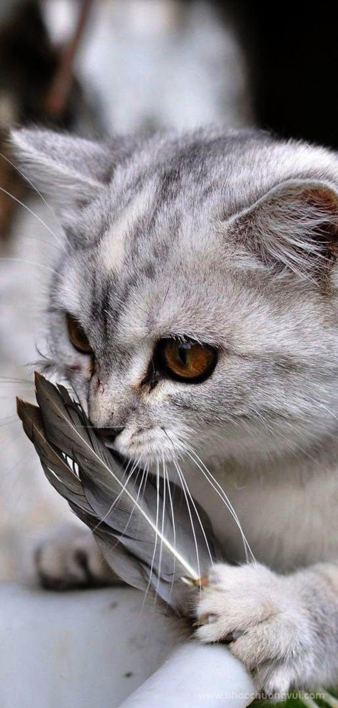 Hình nền mèo cho điện thoại dễ thương nhất 17