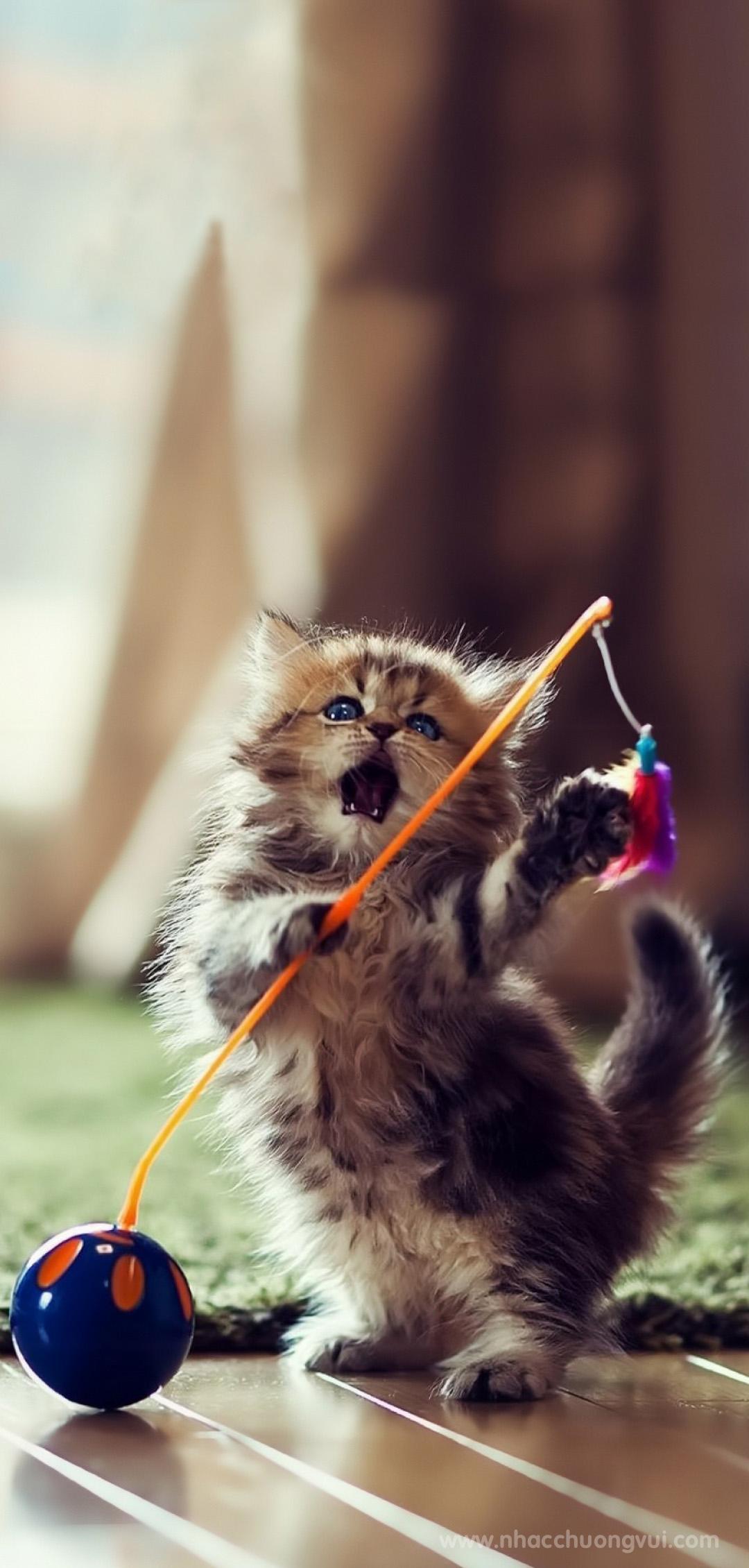 Hình nền mèo cho điện thoại dễ thương nhất 18
