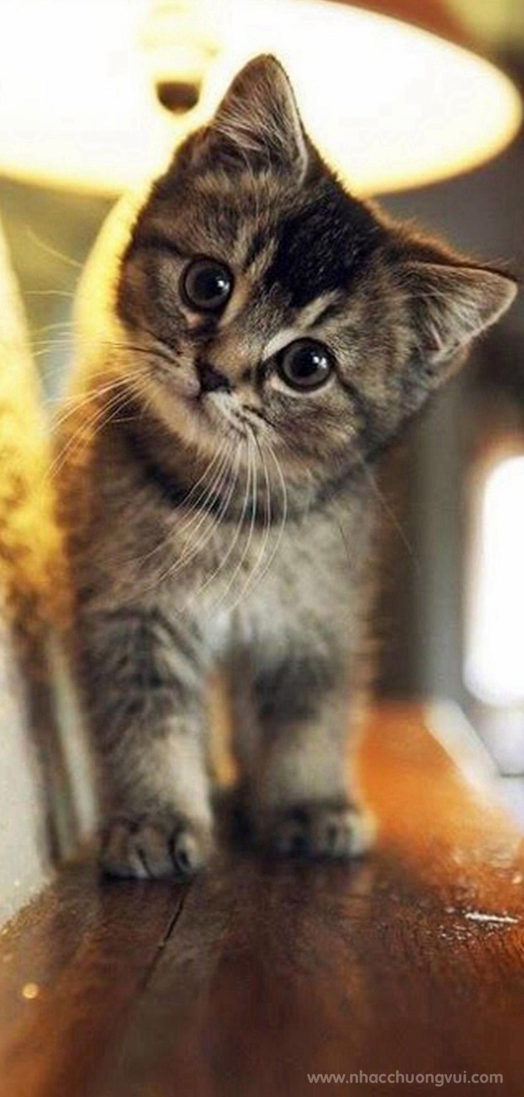 Hình nền mèo cho điện thoại dễ thương nhất 19