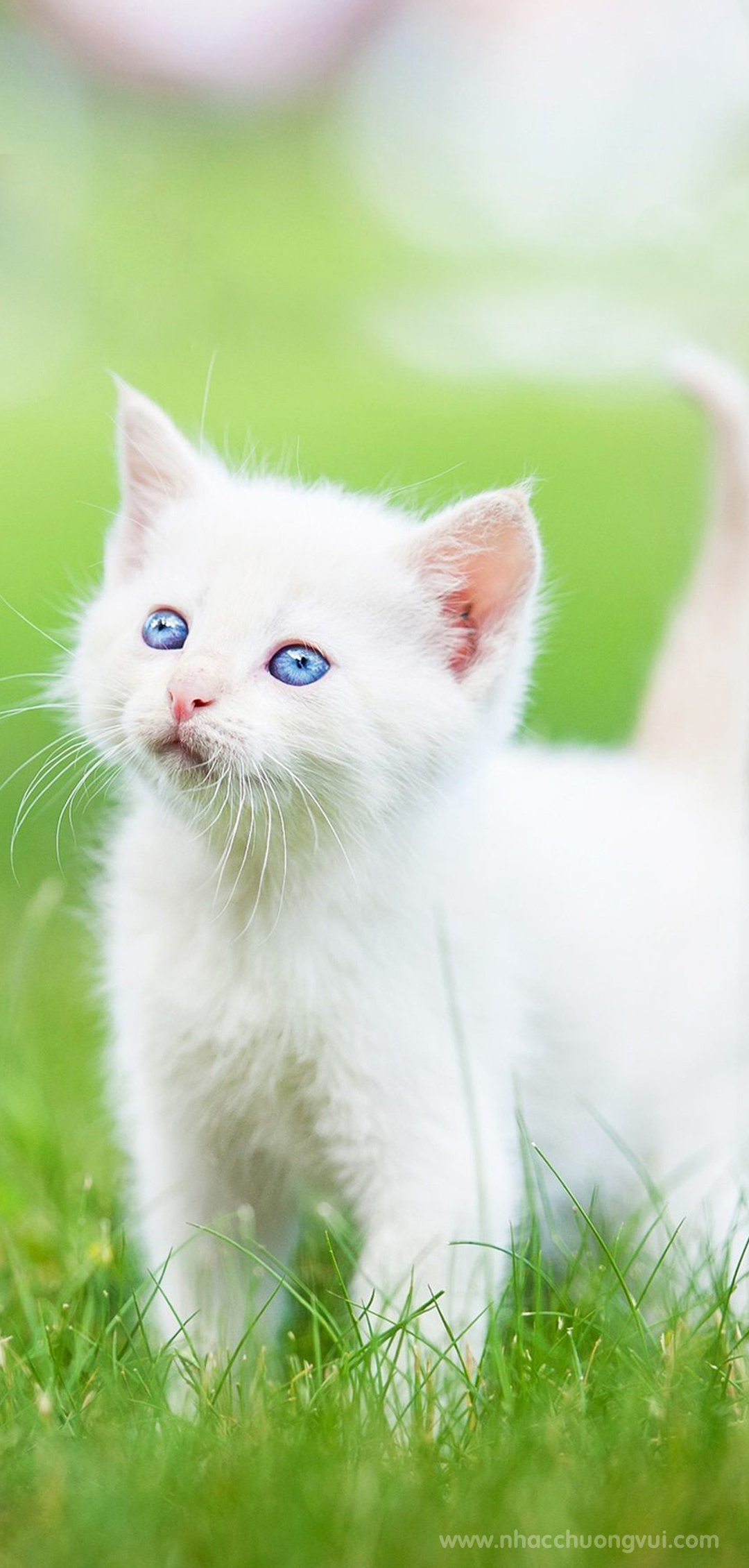 Hình nền mèo cho điện thoại dễ thương nhất 2