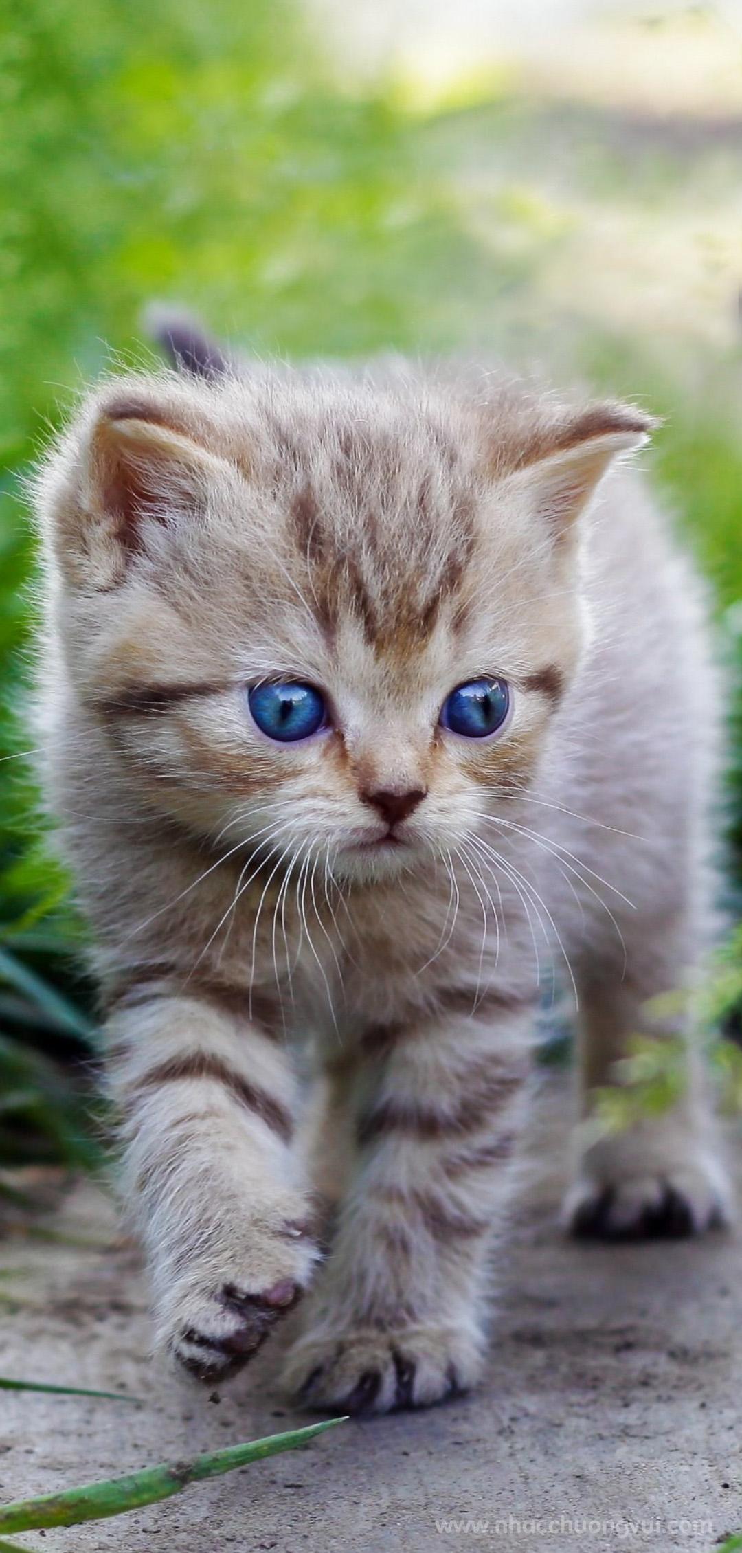 Hình nền mèo cho điện thoại dễ thương nhất 20