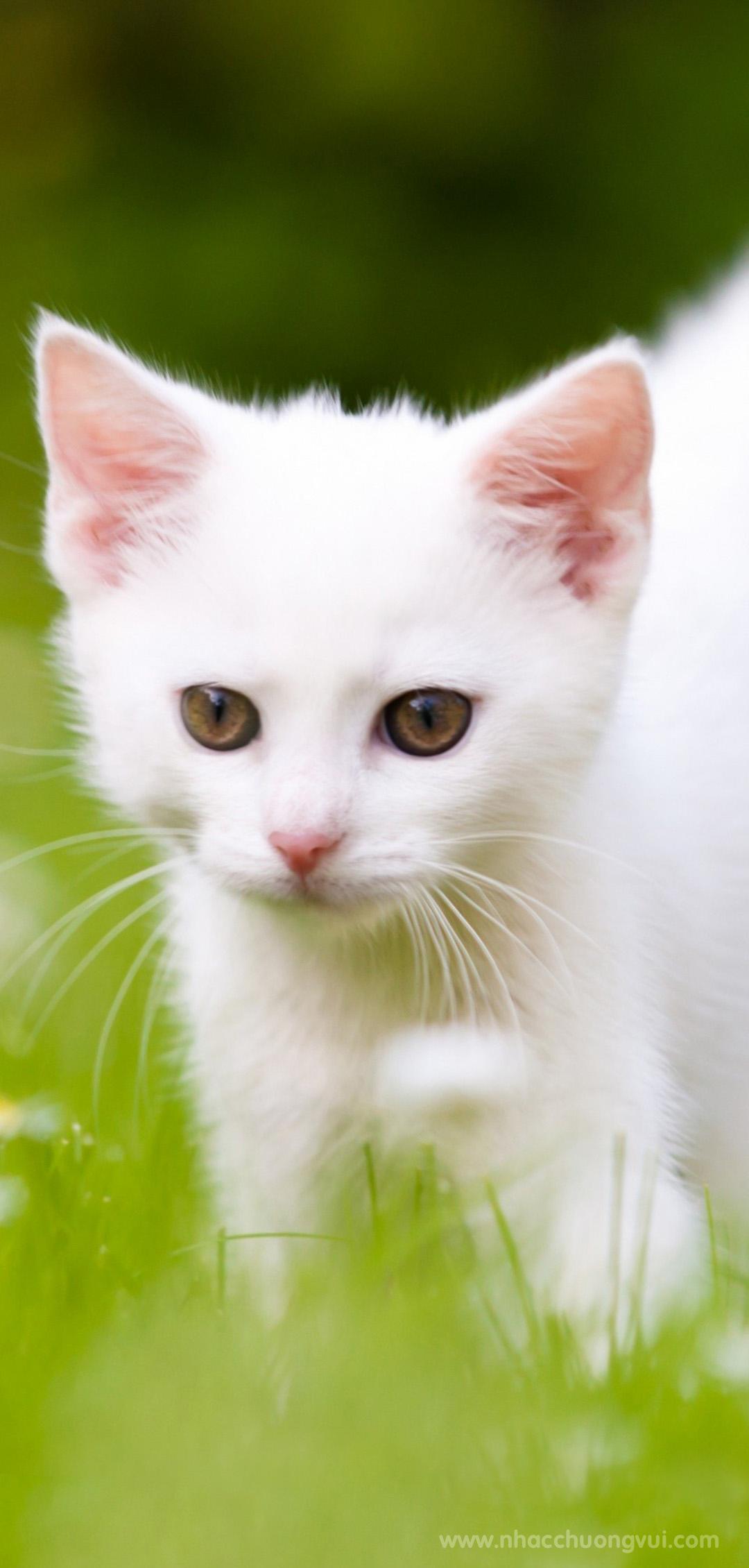 Hình nền mèo cho điện thoại dễ thương nhất 22
