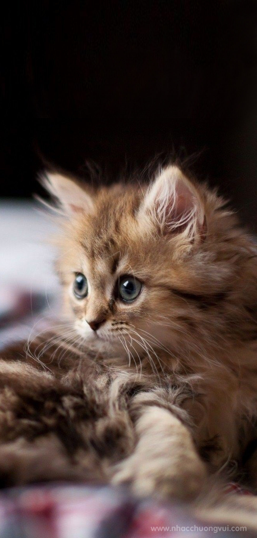 Hình nền mèo cho điện thoại dễ thương nhất 25