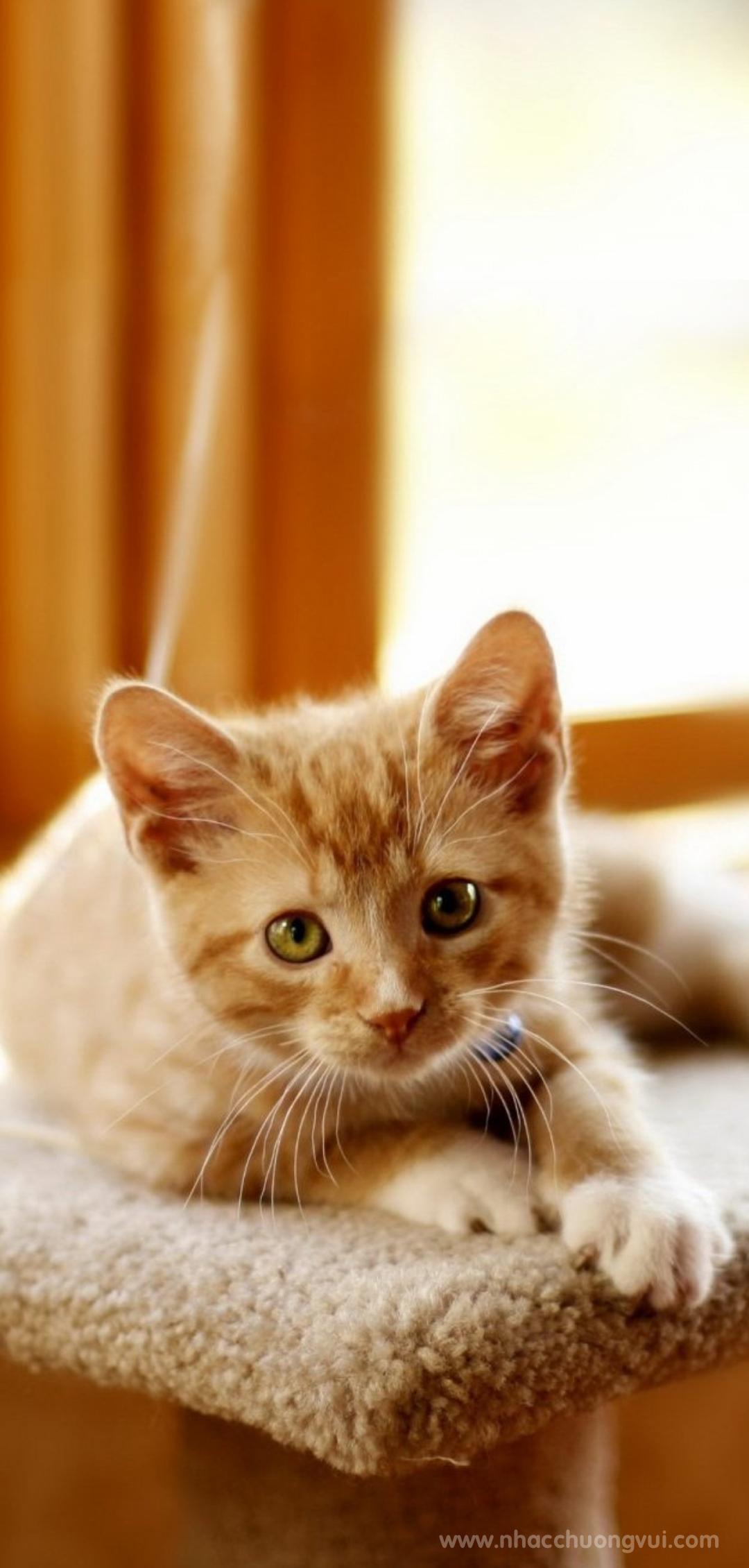 Hình nền mèo ngộ nghĩnh cho điện thoại 26
