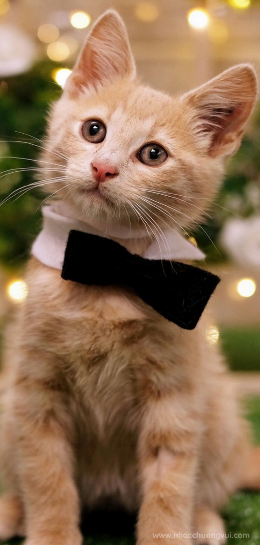 Hình nền mèo cho điện thoại dễ thương nhất 27