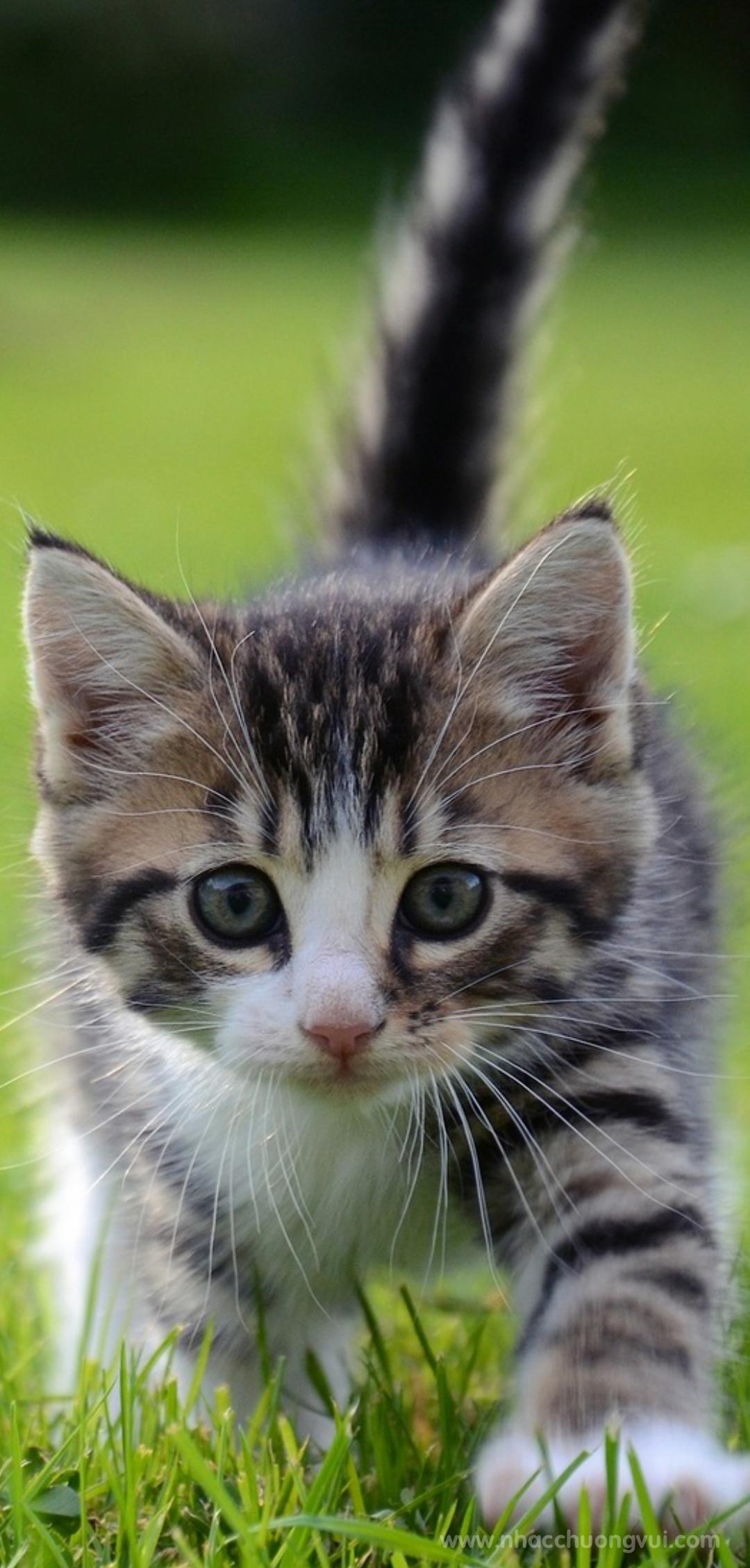 Hình nền mèo cho điện thoại dễ thương nhất 28