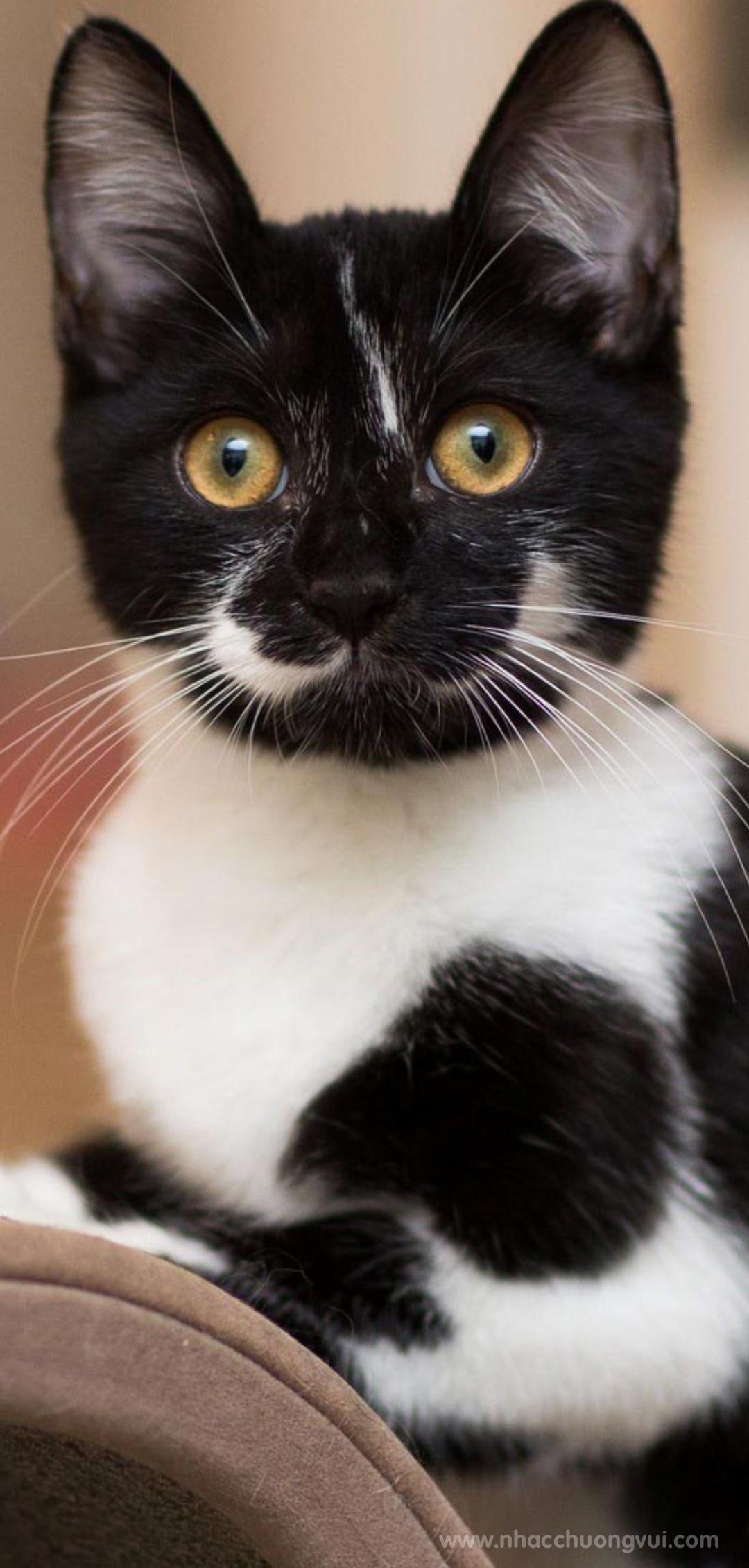 Hình nền mèo cho điện thoại dễ thương nhất 29