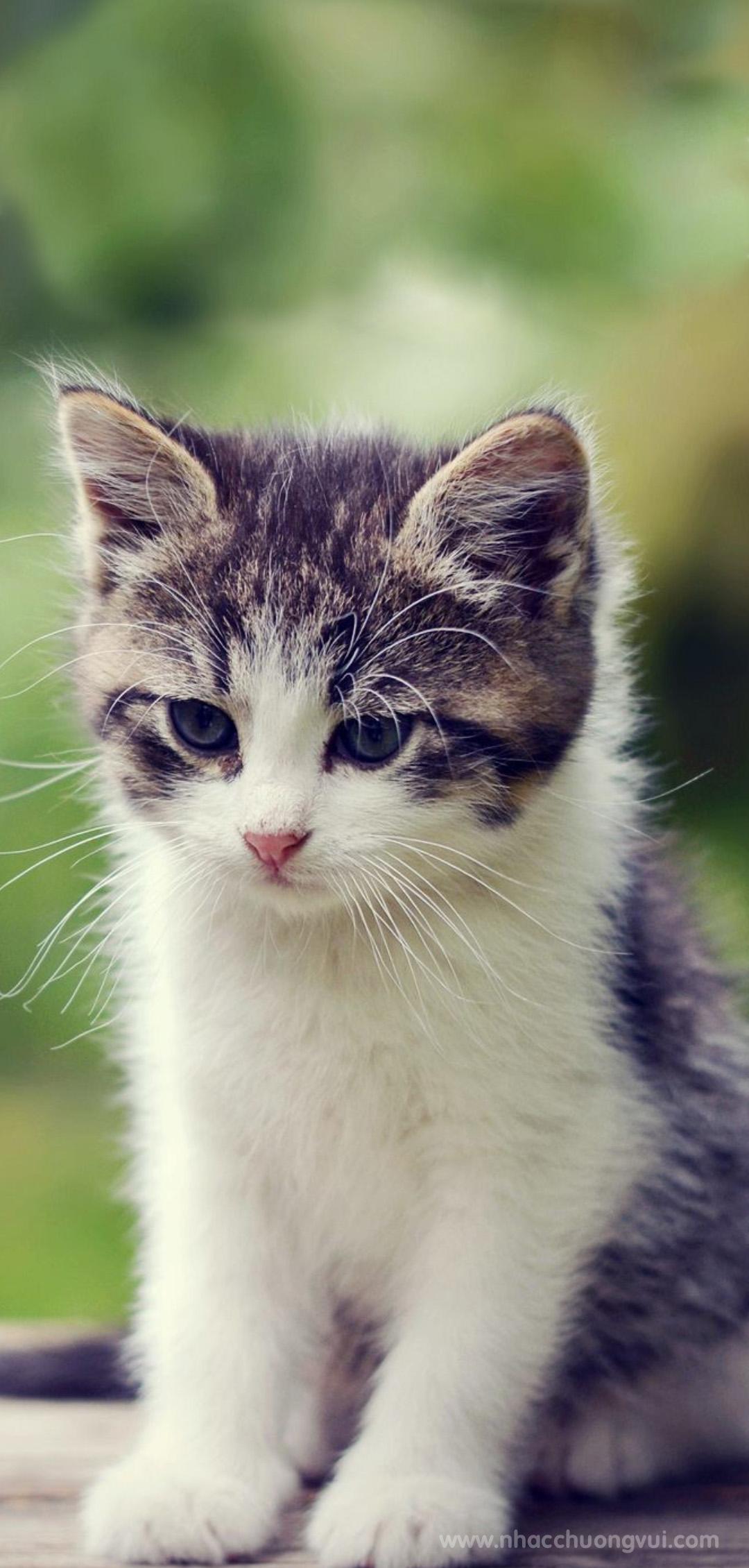 Hình nền mèo đẹp cho điện thoại 3