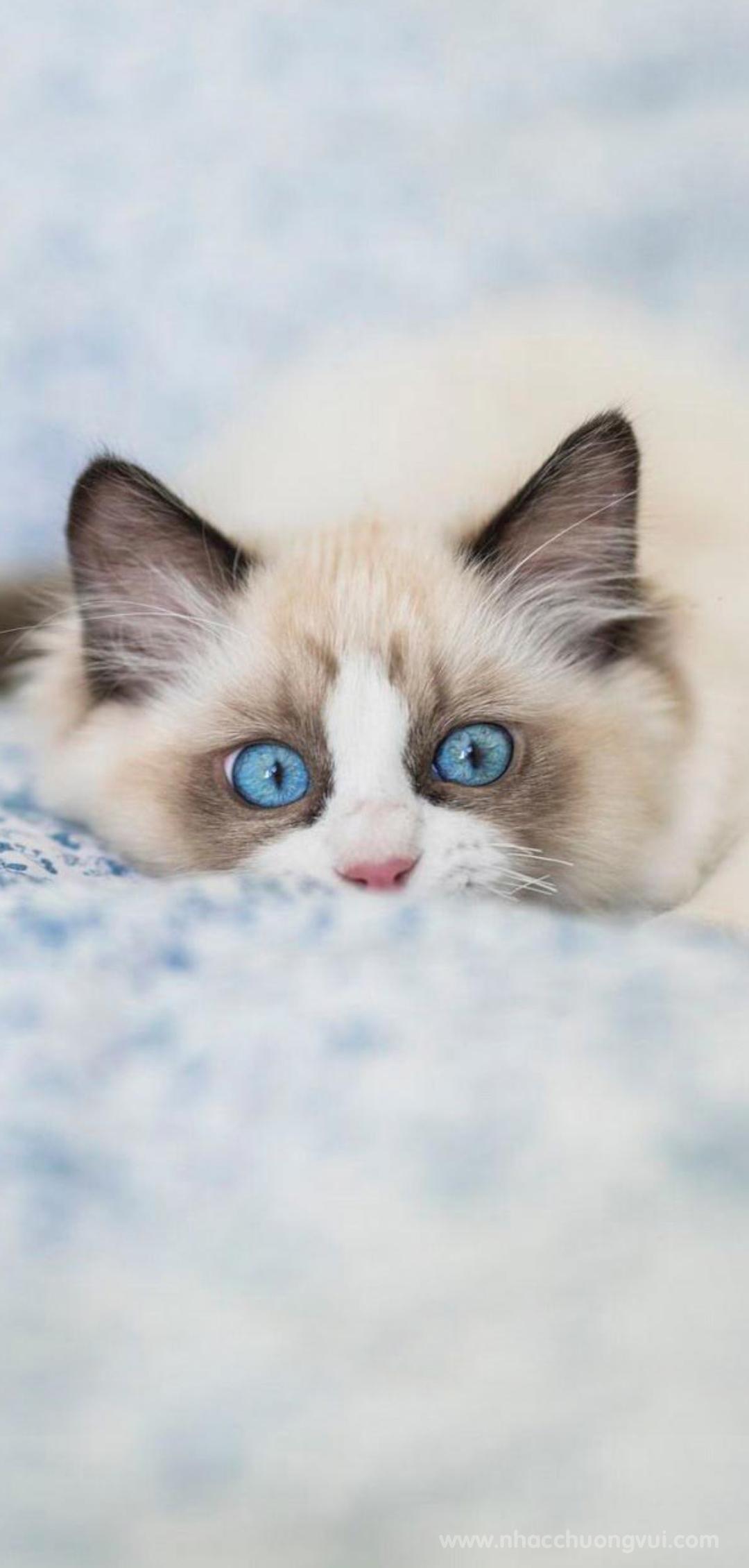 Hình nền mèo cho điện thoại dễ thương nhất 30