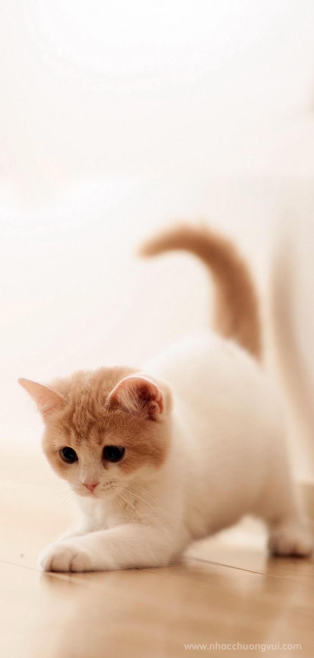 Hình nền mèo cho điện thoại dễ thương nhất 31