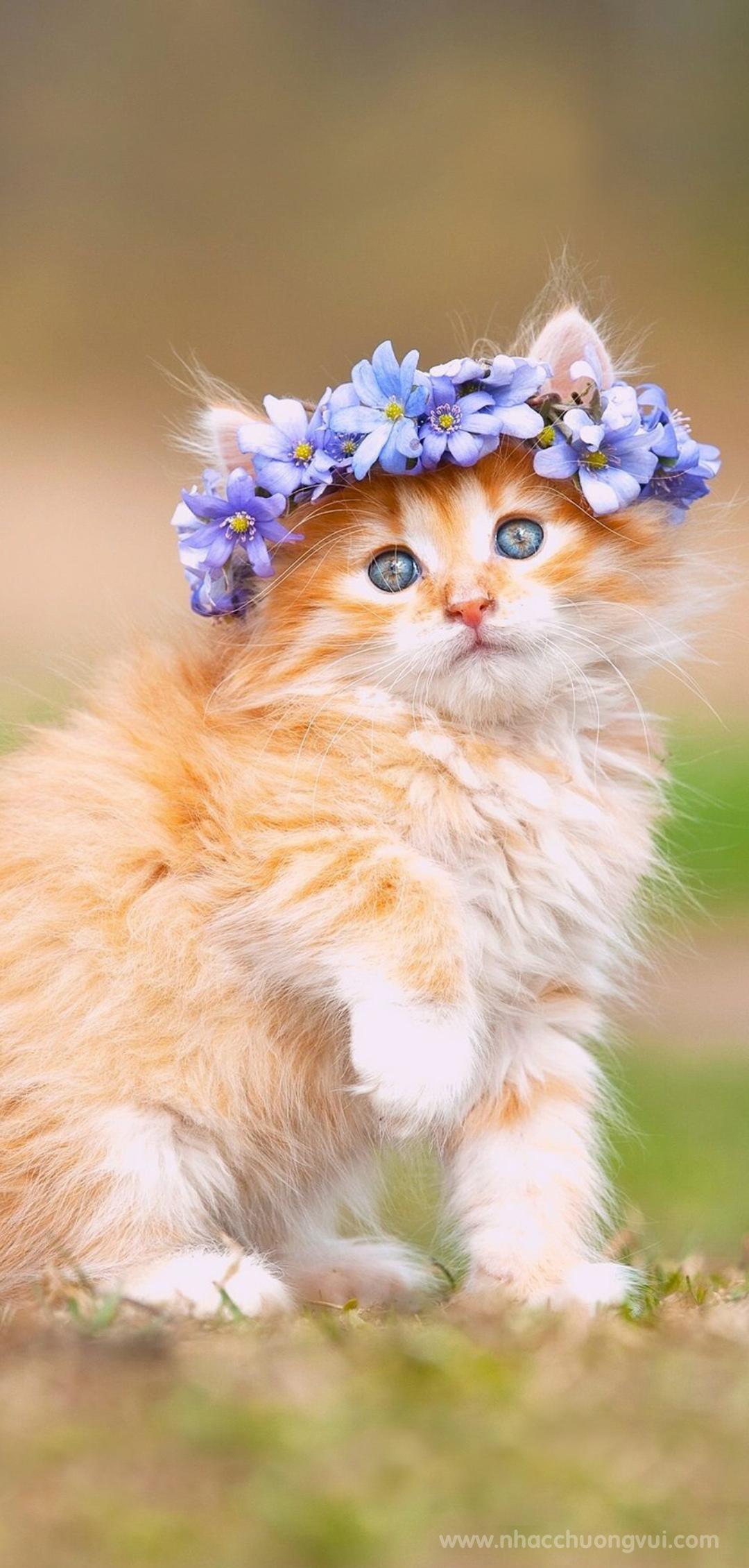 Hình nền mèo cho điện thoại dễ thương nhất 32