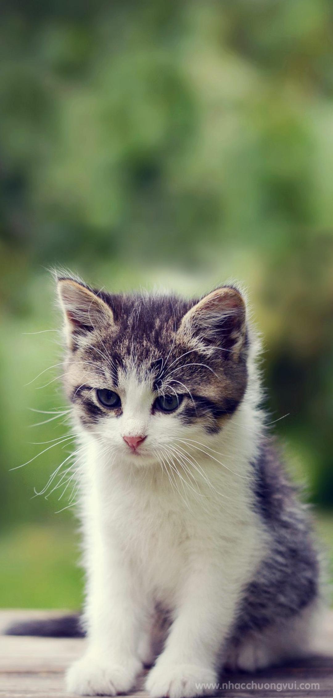 Hình nền mèo cho điện thoại dễ thương nhất 33