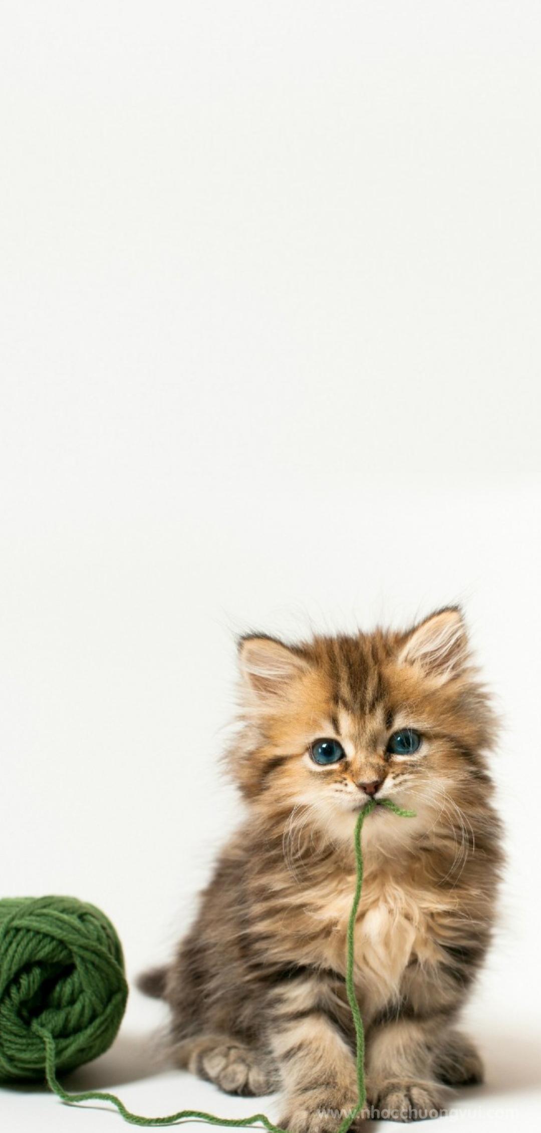 Hình nền mèo cho điện thoại dễ thương nhất 34