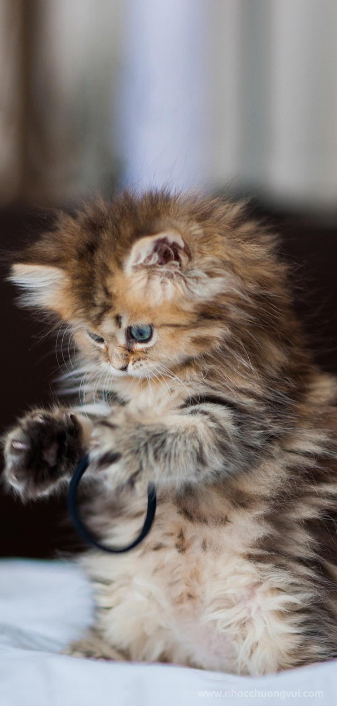 Hình nền mèo con dễ thương nhất cho điện thoại 5