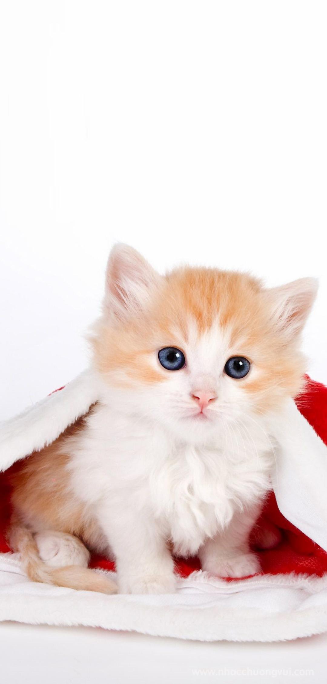 Hình nền mèo dễ thương nhất cho điện thoại 6