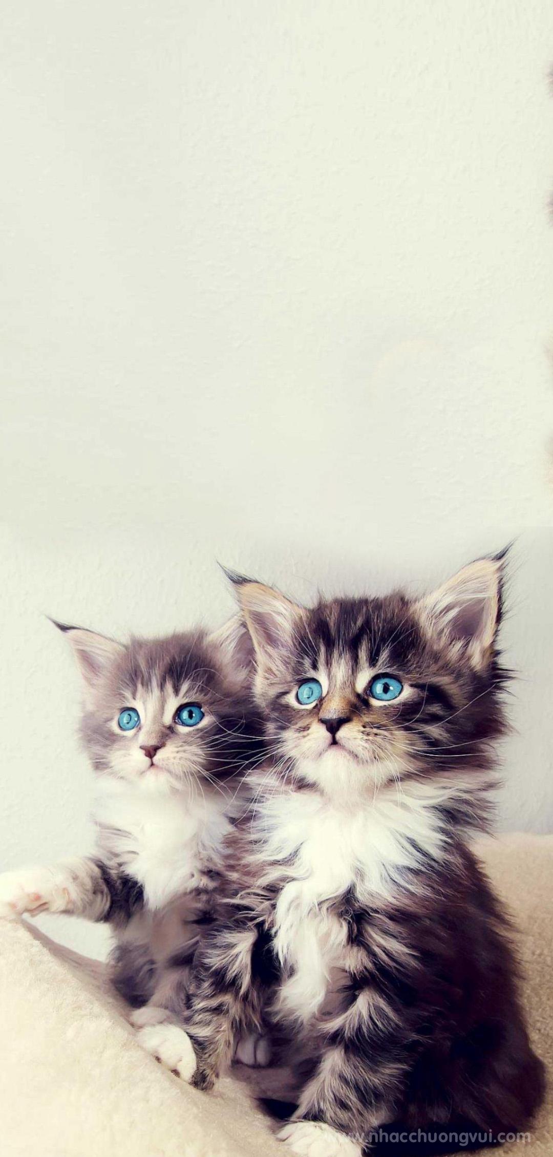 Hình nền mèo cho điện thoại dễ thương nhất 7