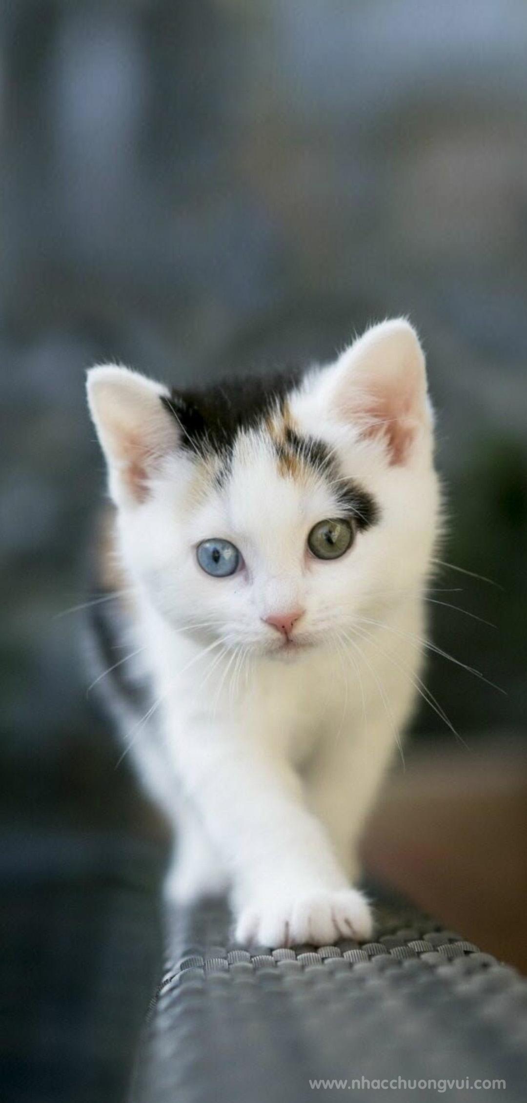 Hình nền mèo cho điện thoại dễ thương nhất 8