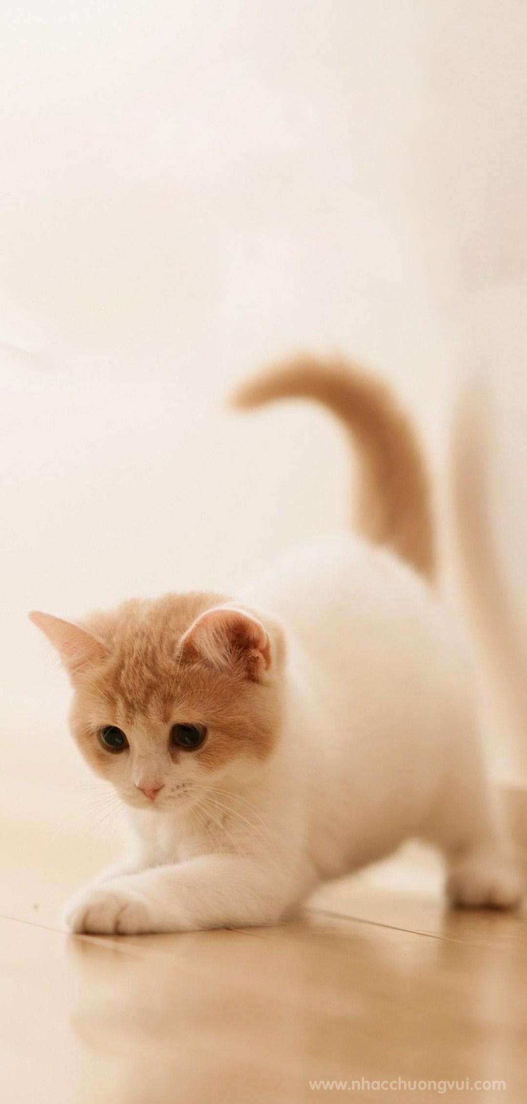 Hình nền mèo cho điện thoại dễ thương nhất 9